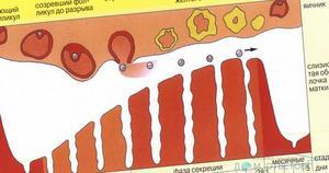 Цвет месячных при беременности
