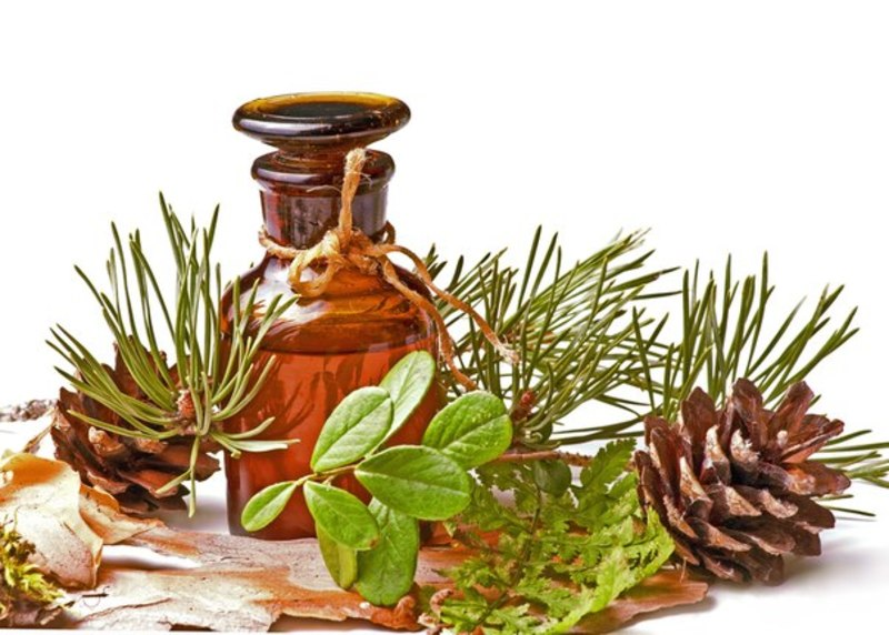 Состав и полезные свойства пихтового масла