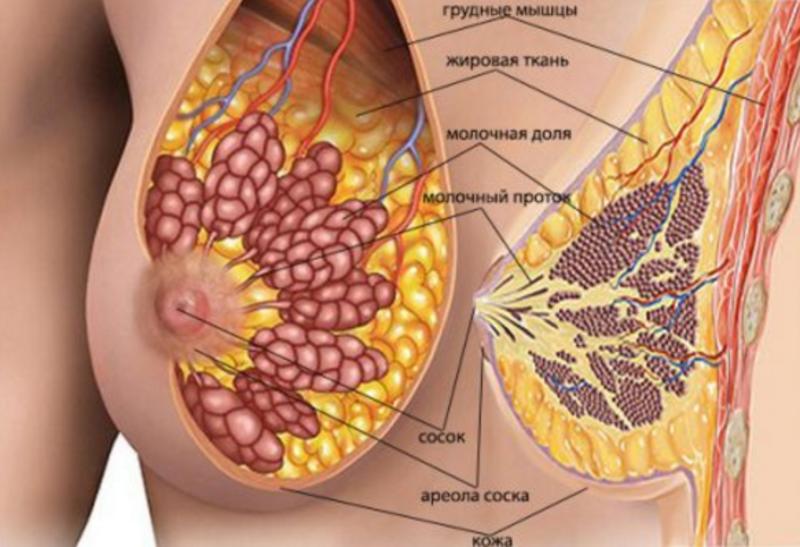 Заболевание молочной железы у женщин лечение thumbnail