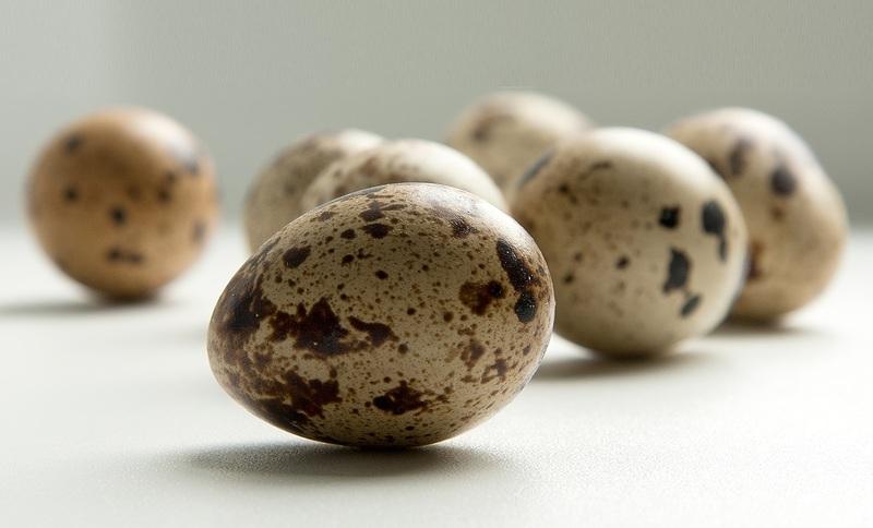 Чем полезны перепелиные яйца для здоровья человека