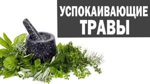 Седативные растения: особенности применения, правила приёма,