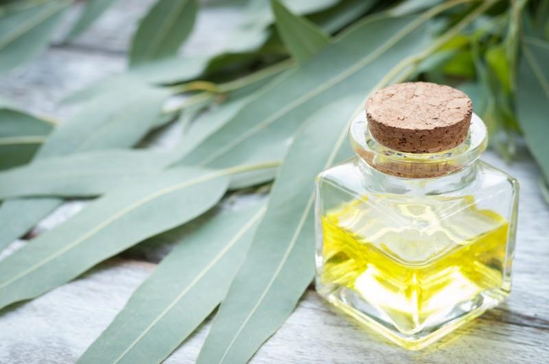 Натуральное эвкалиптовое масло